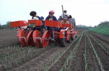Внос Разсадо-посадъчна машина за зеленчуци