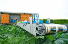 Внос Лента за прибиране на зеленчуци